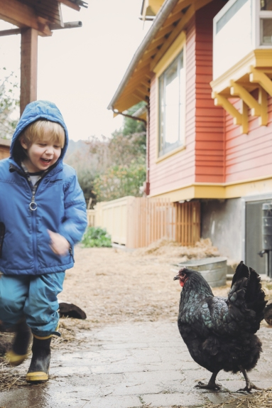 Children help care for our hens.